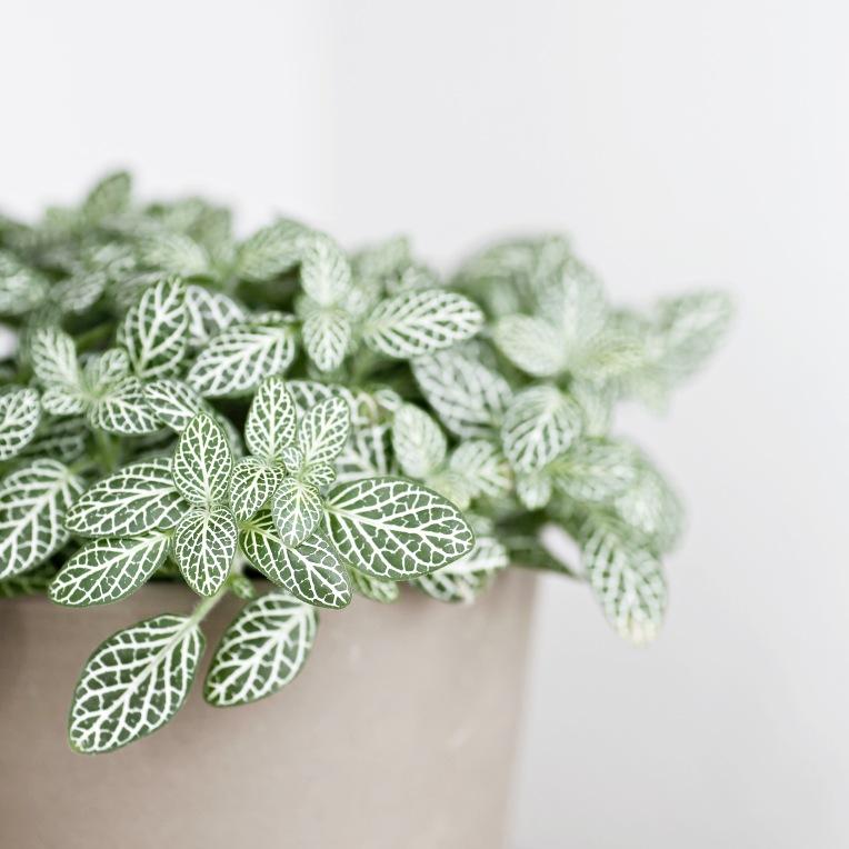 plant_daylight